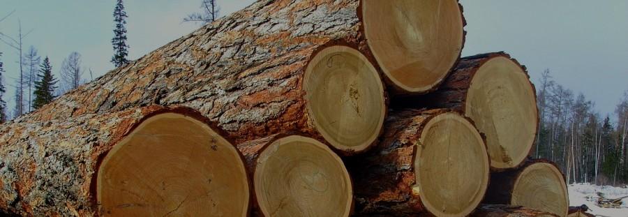 Огеупорная кора красного дерева