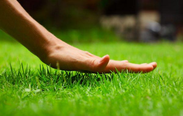 Шелковистый газон своими руками.