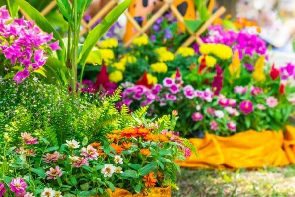 Цветники и клумбы своими руками на даче цветущие все лето
